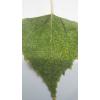 Бытовой прибор для получения биологически активной воды