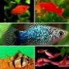 Красивые мирные рыбки в Ваш аквариум Разные