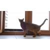 Москитные сетки для владельцев домашних животных
