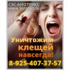 Уничтожение клопов, служба в городе Серпухове
