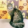 Стрижка котов в Свиблово,  Груминг кошек в Свао,  Ростокино