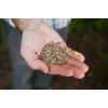 Зерно конопли,  пищевой для масла,  жмых,  семечка