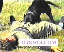Дрессировка собак Киев