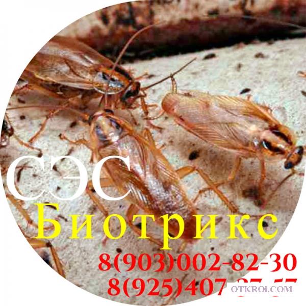 Обработка уничтожение тараканов и клещей туманом в Покрове
