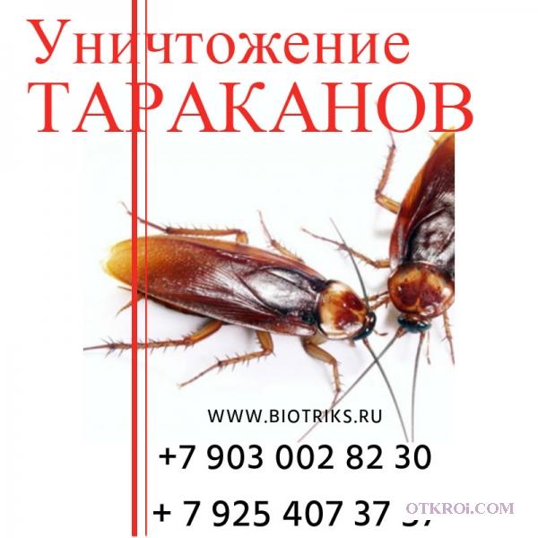 Травля тараканов, клещей туманом в Пакрове