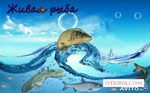 Зарыбление водоемов, живая рыба