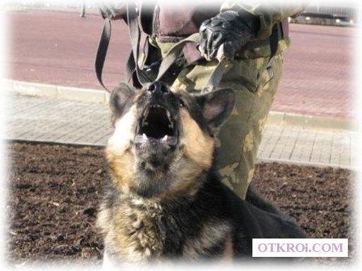 Охрана объектов со служебными собаками