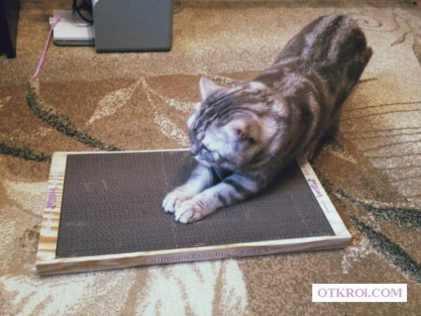Новые когтеточки-лежанки для кошек в Дагестане.
