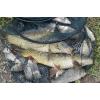 Отдых в Крыму, рыбалка на озере, + 79788278014