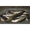 Рыбалка,     охота,     отдых в Дельте Волги под Астраханью (частный сектор)     .