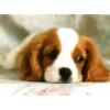 Вызов ветеринара на дом без наценок ветеринарных клиник!