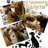 Профессия Грумер.  Обучение - груминг собак и кошек.  Стрижка,  Триминг