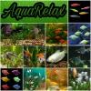 Мирные рыбки в Ваш аквариум на любой вкус
