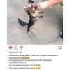Зоосалон Дмитровский район,   стрижка собак и кошек в САО,   Выезд на дом в Алтуфьево