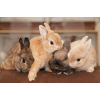 Продадим крольчат